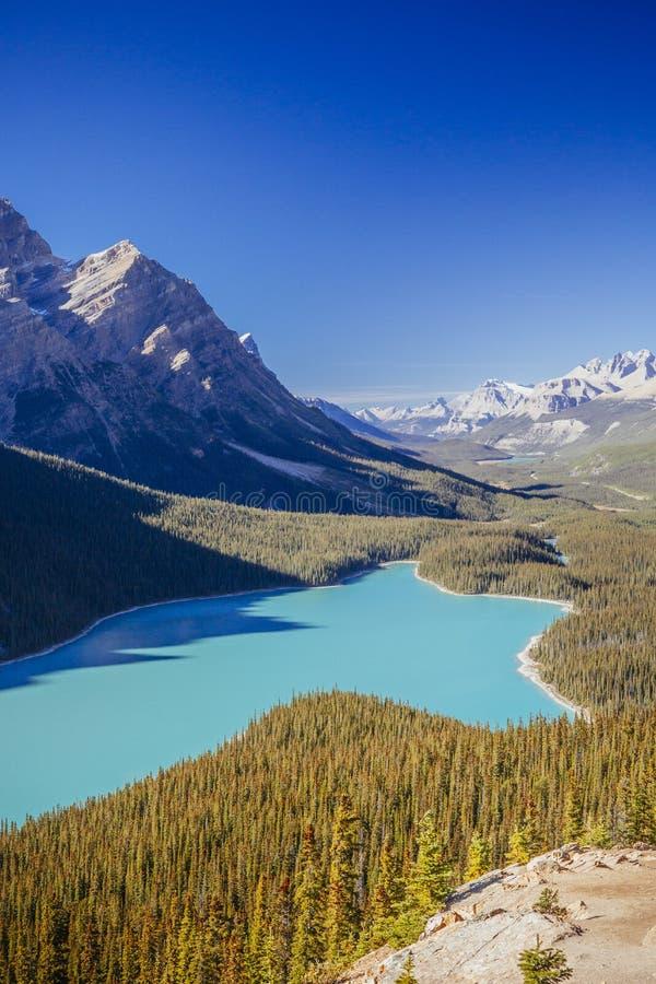 Nationalpark des Peyto See-, Banff, Rocky Mountains, Alberta, Canad stockfoto