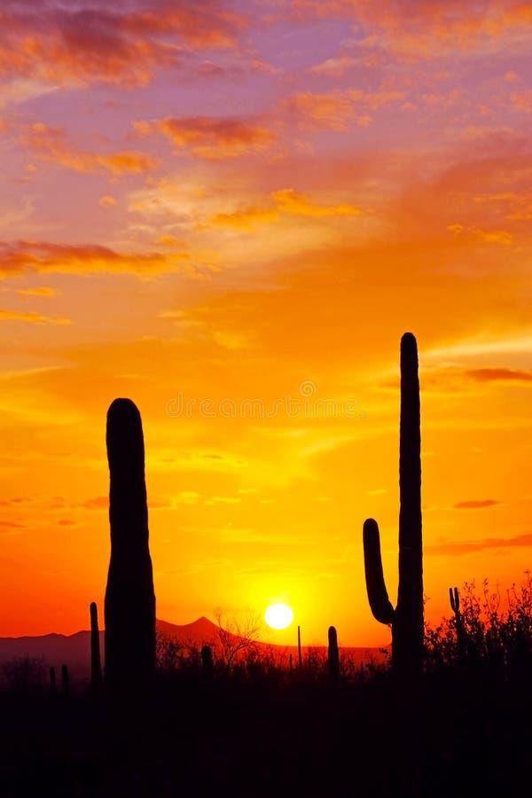 Nationalpark des Saguaro stockbilder