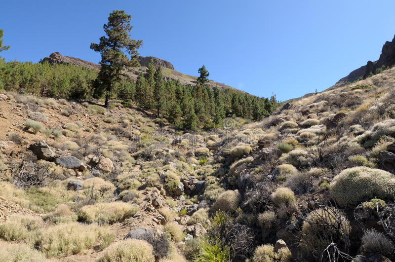 Nationalpark EL-Teide. Tenerife, Spanien lizenzfreie stockfotografie