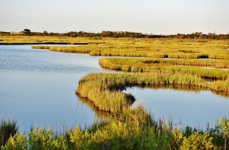 Nationalpark för ö för assateague för Maryland tillståndsUSA arkivfoto