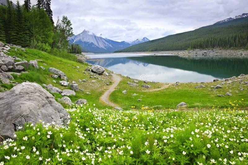 nationalpark för berg för Kanada jasperlake arkivfoton