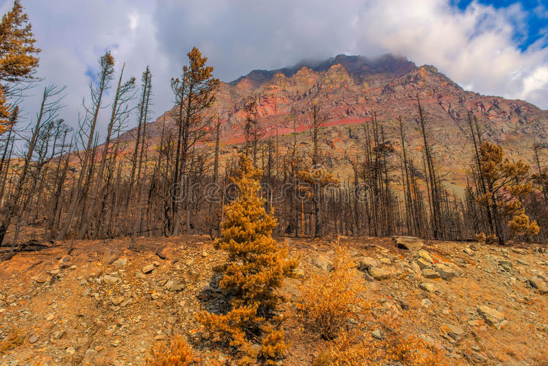 Nationalpark 2015 för efterdyningReynolds Creek Wildland Forest Fire glaciär royaltyfri foto