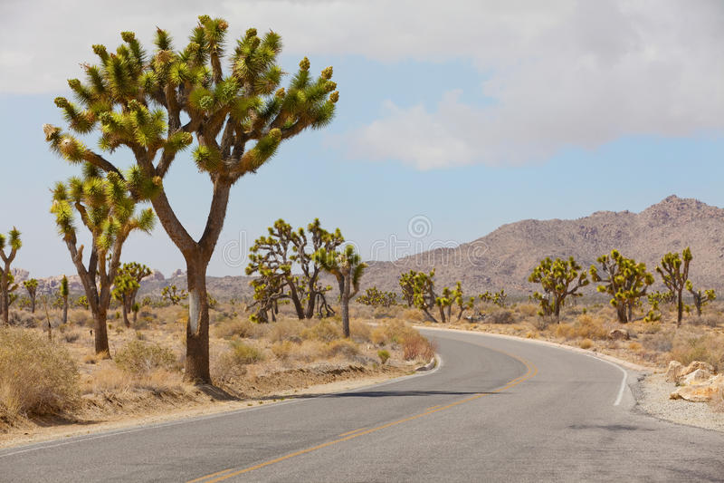 Nationalpark för Joshua träd royaltyfria bilder