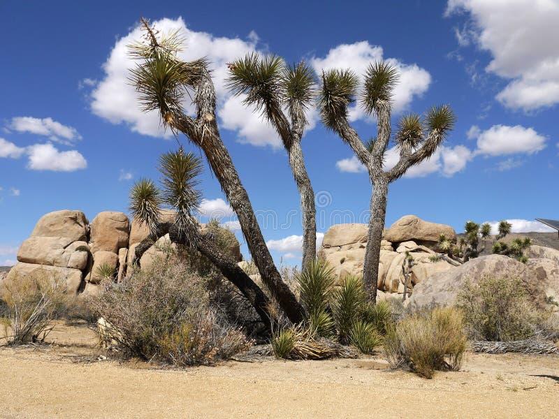 Nationalpark för Joshua träd Kalifornien - USA royaltyfri fotografi