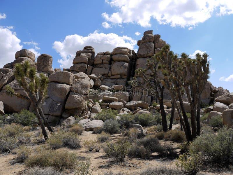 Nationalpark för Joshua träd Kalifornien - USA royaltyfri foto