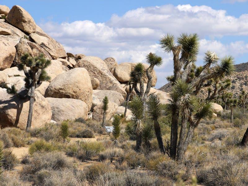 Nationalpark för Joshua träd Kalifornien - USA royaltyfria bilder