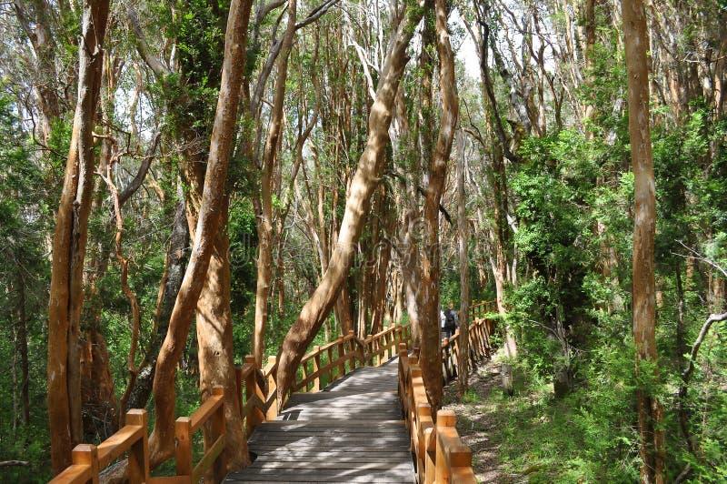 Nationalpark för Los Arrayanes royaltyfri fotografi