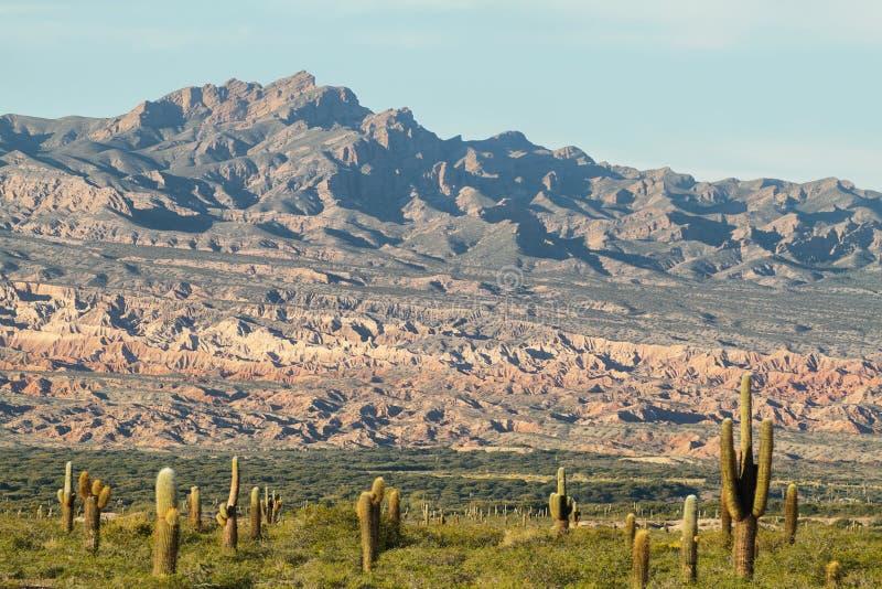 Nationalpark för Los Cardones, Argentina royaltyfria foton