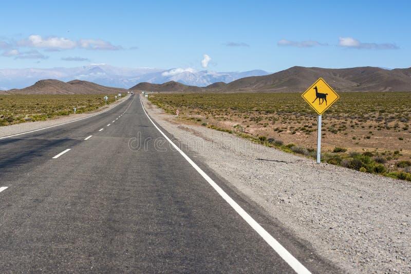 Nationalpark för Los Cardones i Salta, Argentina. arkivfoto