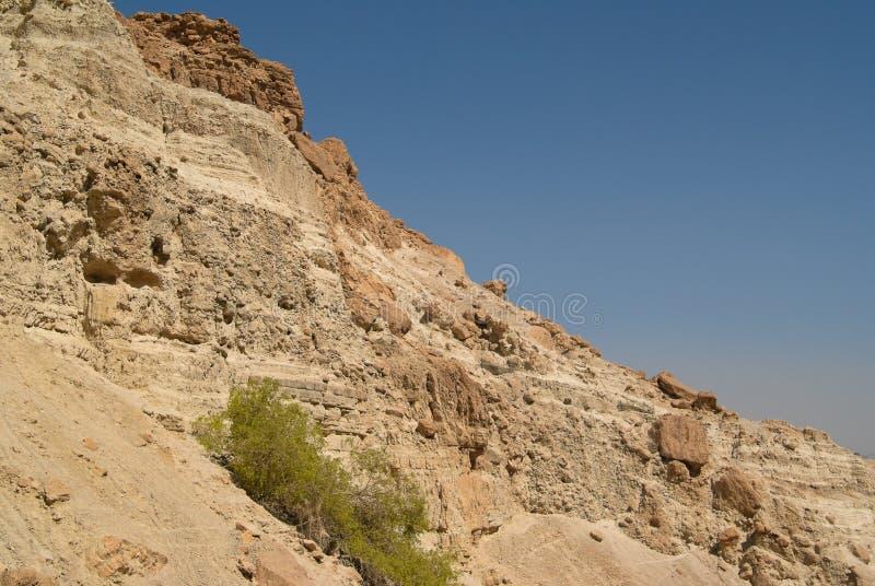 Nationalpark Nahal David stockfoto