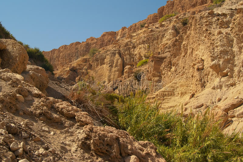 Nationalpark Nahal David stockbilder