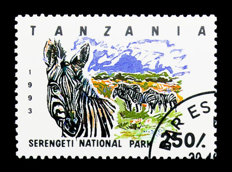 Nationalpark Serengeti, Ebenen-Zebra (Equus Quagga), serie, cir stockbilder
