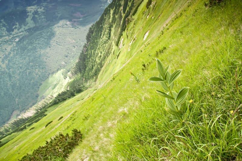 Nationalpark - Tatras. stockbilder