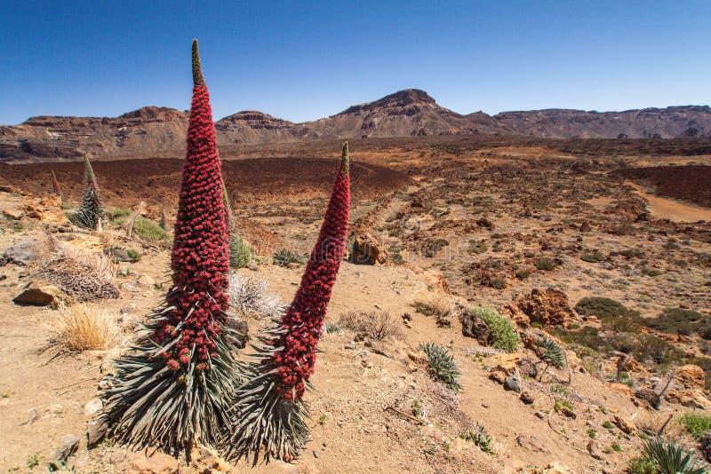 Nationalpark Teide lizenzfreie stockbilder