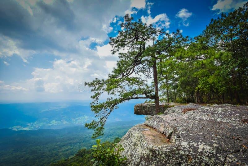 Nationalpark Thailands stockfoto