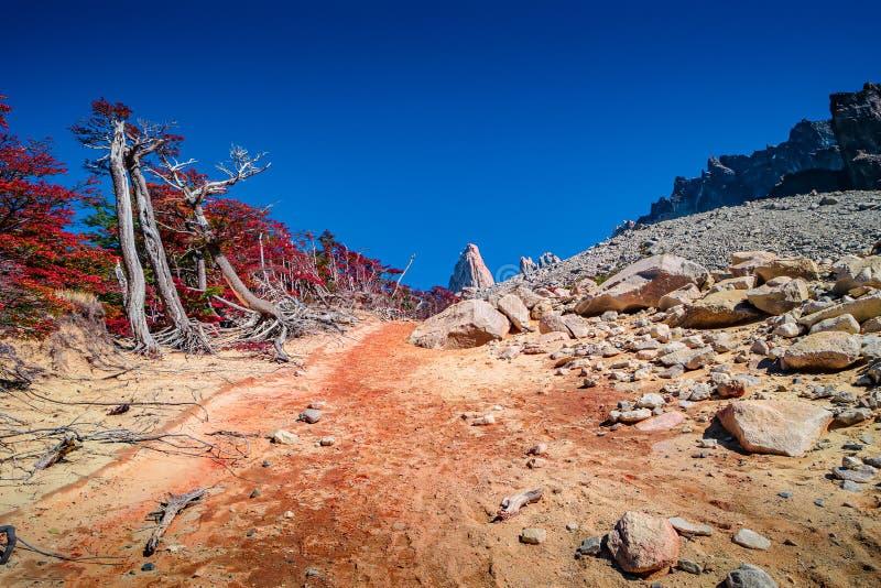 Nationalpark Torres Del Paine, seine W?lder und Gipfel am goldenen Herbst und am blauen Himmel, Patagonia, Chile lizenzfreies stockfoto
