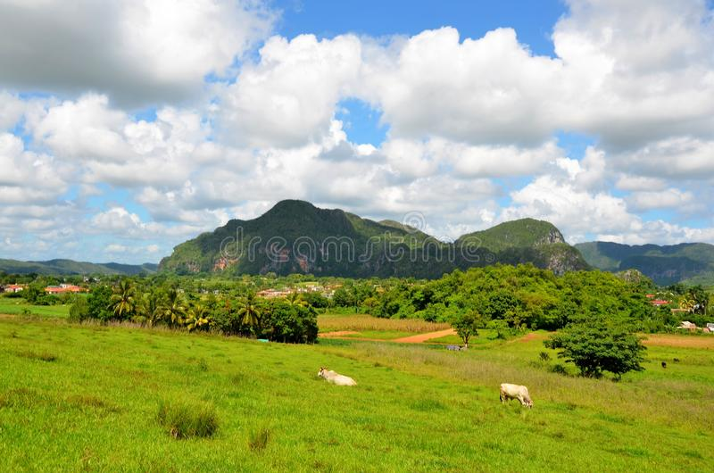 Nationalpark Vinales stockfotos
