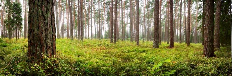 Nationalpark-Waldpanorama Lahemaa lizenzfreie stockbilder