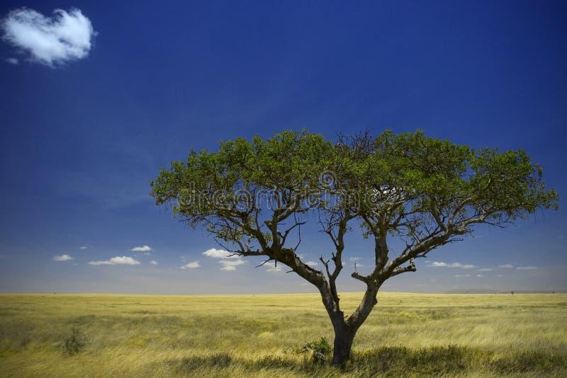 nationalparkserengeti royaltyfri fotografi