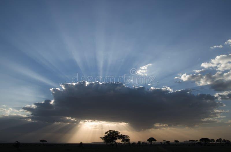 Nationalparksonnenuntergang Serengeti stockfotografie