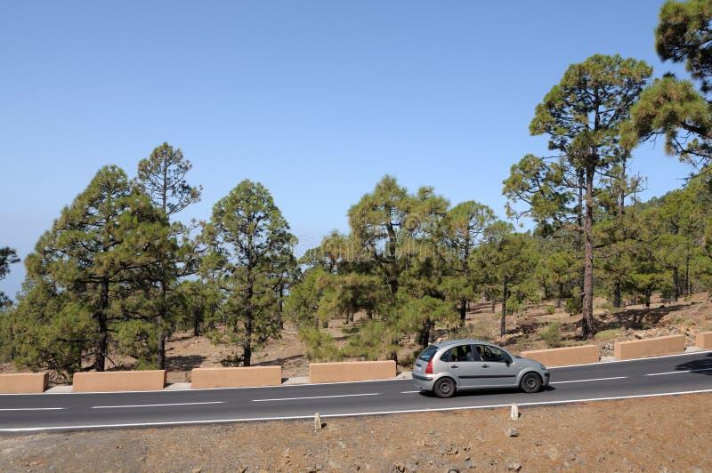 nationalparkvägteide tenerife arkivbilder