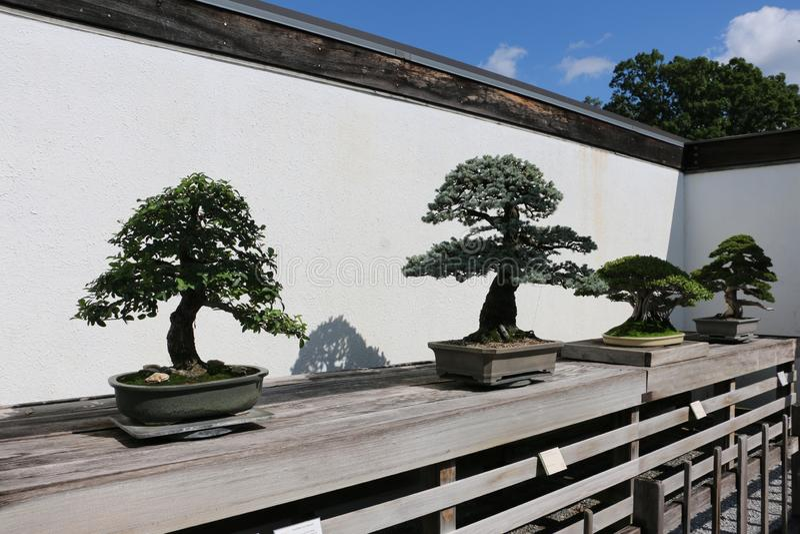 Nationell Arboretum för Förenta staterna arkivfoton