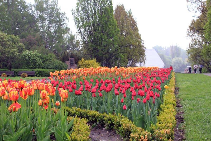 Nationell botanisk trädgård, Kiev royaltyfria foton