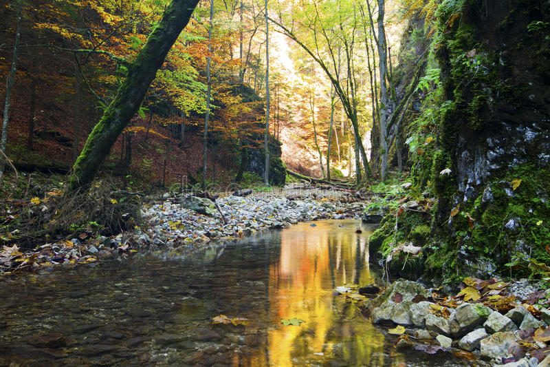 nationell paradisparkslovak slovakia arkivfoto