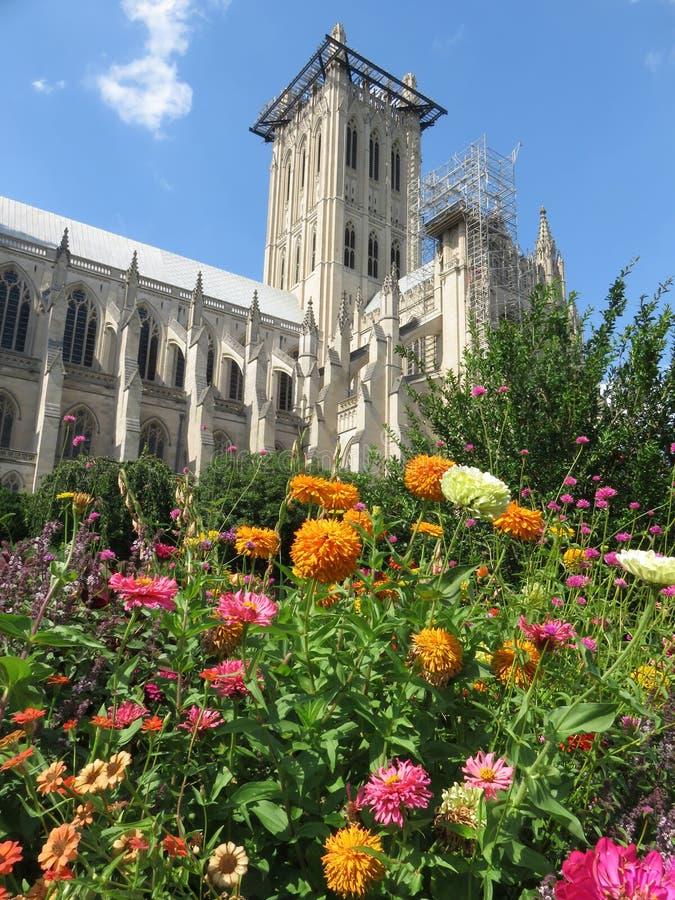Nationella katedral och Zinnia Flowers royaltyfria foton