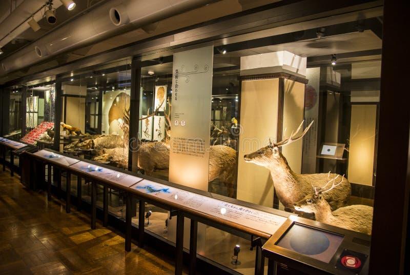 Nationellt museum av naturen och vetenskap i Japan royaltyfri bild