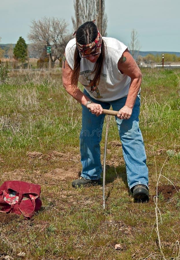 Free Native American Indian Woman Digging Camas Royalty Free Stock Images - 22566899