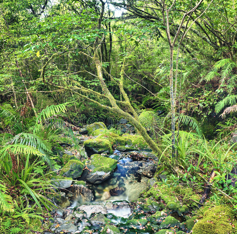 Download Native bush stock image. Image of forest, fairytale, dicksonia - 23758177