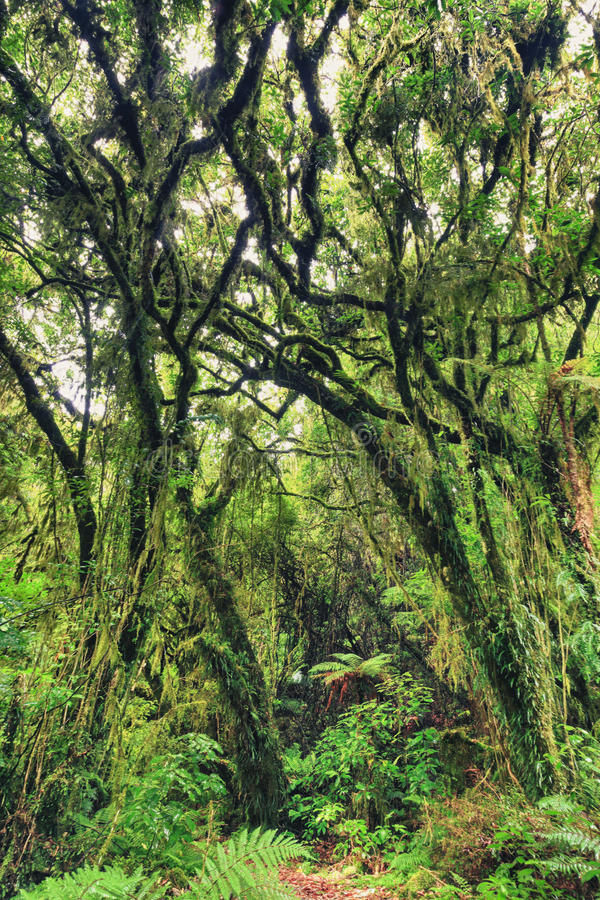 Download Native bush stock photo. Image of mythical, green, island - 24483212