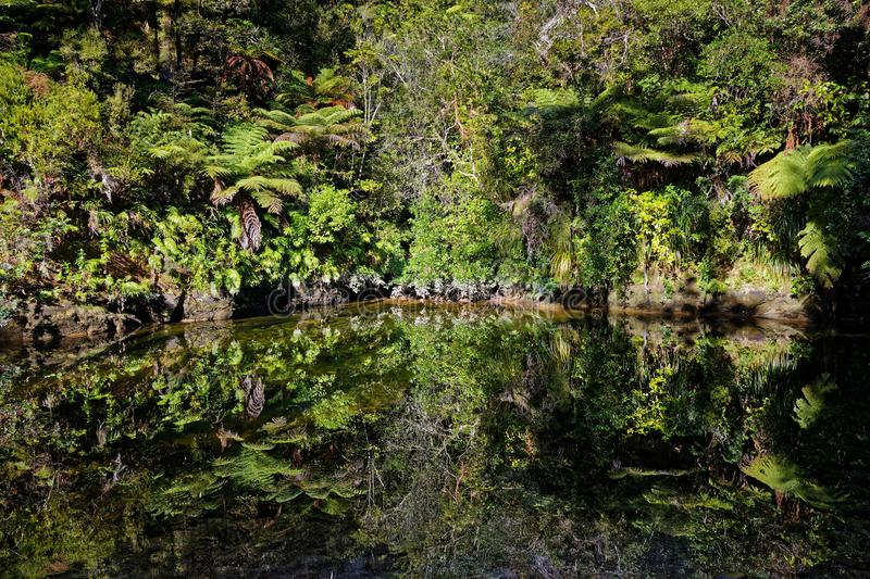 Native bush reflected in a stream, Abel Tasman National Park. On the Abel Tasman Coastal Track near Cleopatra`s Pools stock image