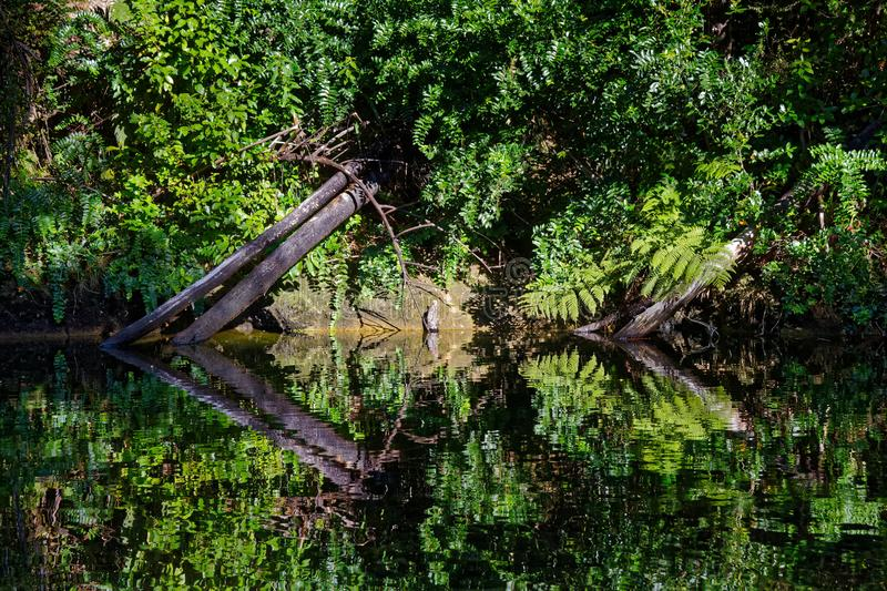 Native bush reflected in a stream. Abel Tasman National Park, New Zealand royalty free stock image