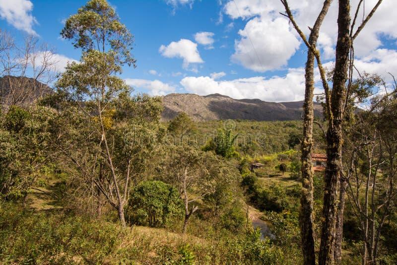 Natural vegetation in rural Brazil stock photo