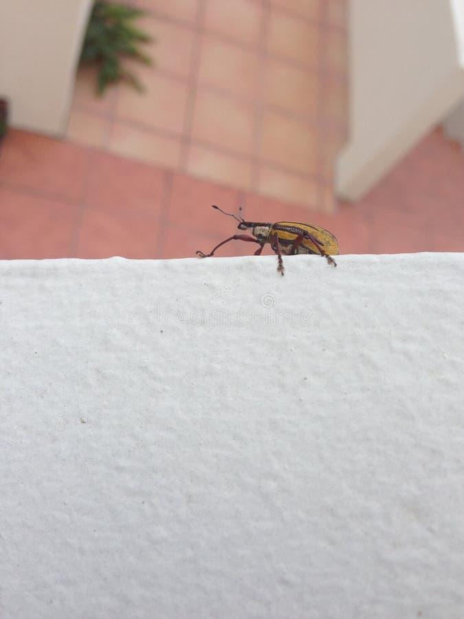 Native Island Insect. Saint Thomas, United States Virgin Islands stock image