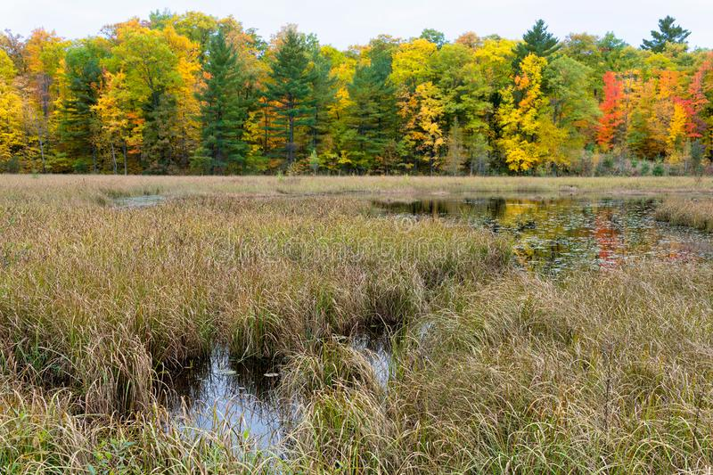 Native Lakeshore Grasses and marsh in Autumn royalty free stock images