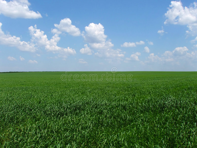 Native open spaces royalty free stock image