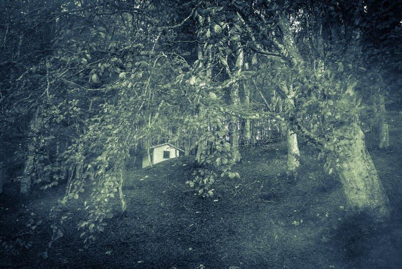 Natt i en mörk skog royaltyfri foto