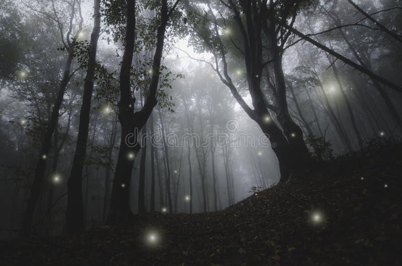 Natt i förtrollad sagaskog för magi royaltyfri foto