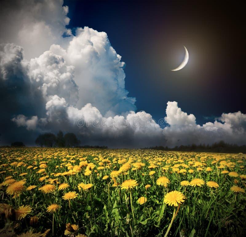 Natt och månen på ett gult blommafält royaltyfria bilder