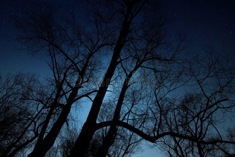 Natt som skjutas av en trädkontur royaltyfria foton