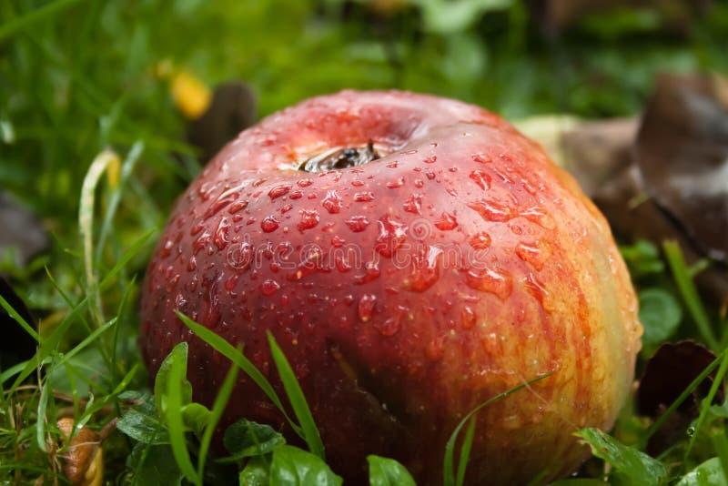 Natte appel stock afbeeldingen