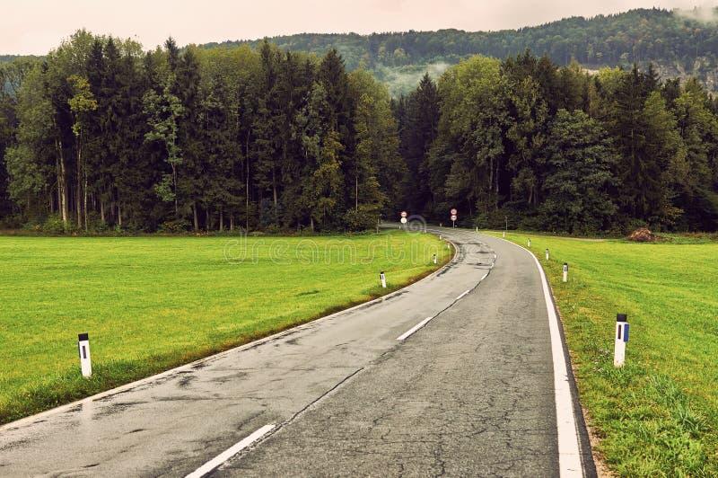 Natte asfaltweg trought diepe bos natuurlijke dramatische backg royalty-vrije stock fotografie