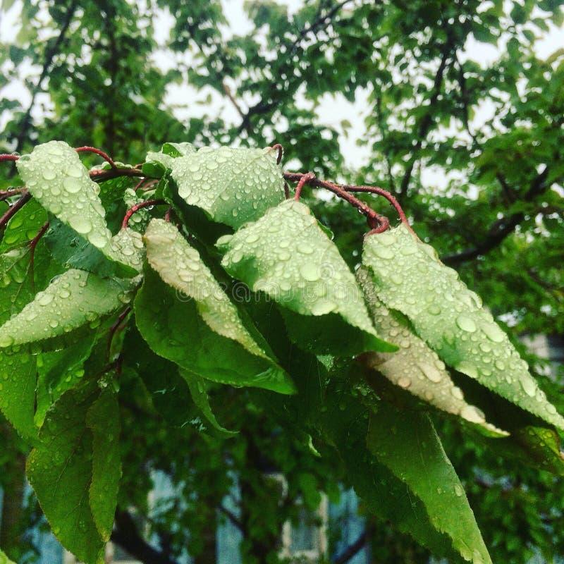 Natte bladeren royalty-vrije stock afbeelding