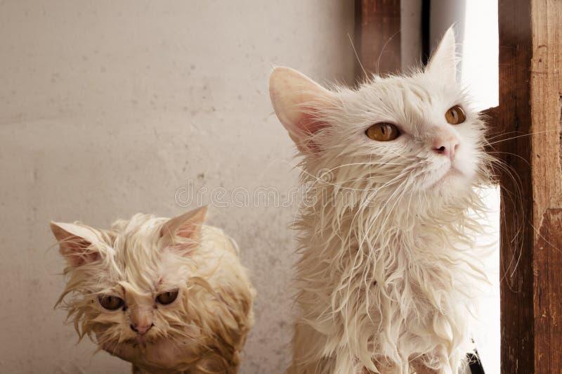 Natte katten royalty-vrije stock afbeeldingen