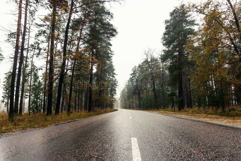 Natte lege asfaltweg door bos in mistige regenachtige de herfstdag, weg in landelijk landschap stock afbeeldingen