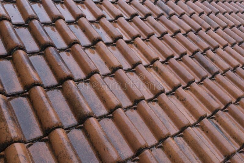 Natte oranje daktegels op het dak stock foto
