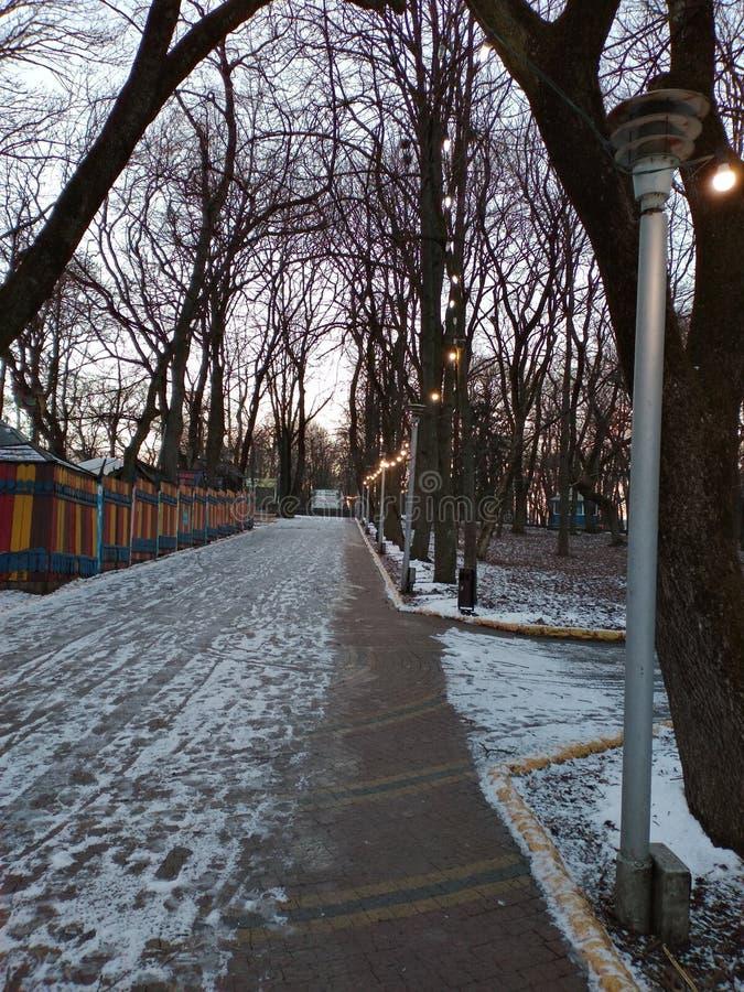 Natten i vinter parkerar royaltyfri bild